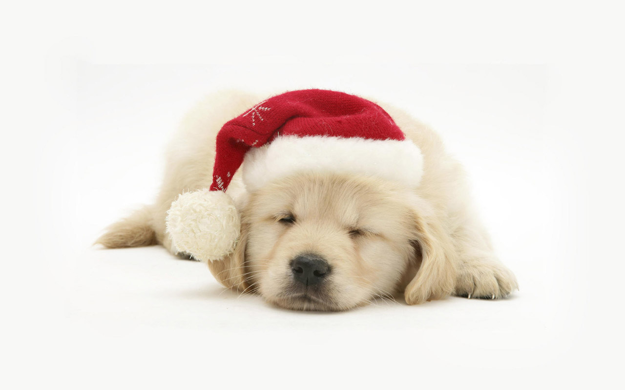 Cute Christmas Wallpapers: Free Download Christmas Pets HD Wallpapers In 1280x800