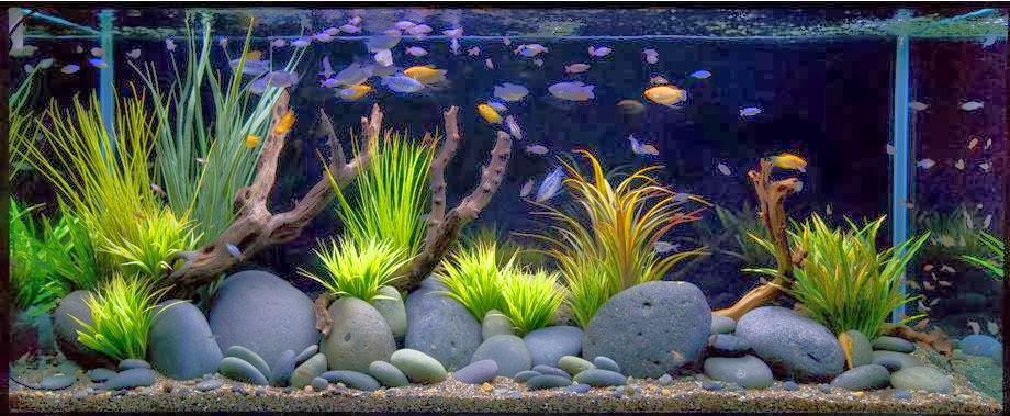 dbc12f84e74770 Як доглядати за рибками в акваріумі? Інструкція для початківців ...