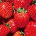 Fresas, conoce las propiedades y beneficios de esta maravillosa fruta
