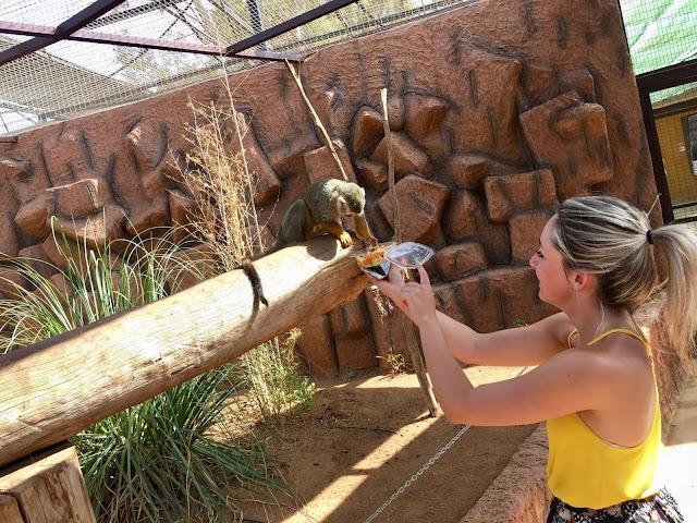 Monkey-park-los-cristianos-feeding-monkey