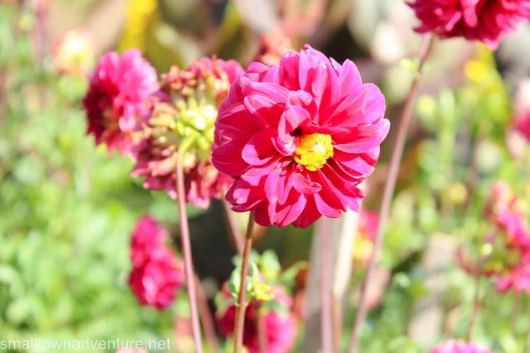 1000 Fragen an mich selbst - Blumen, 1000 Fragen, Blogparade, Blogaktion, Blumenfotos, Fotografie, Canon Eos 600D