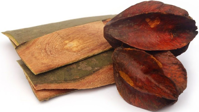 25 Benefits of Terminalia Arjun Bark You Never Knew