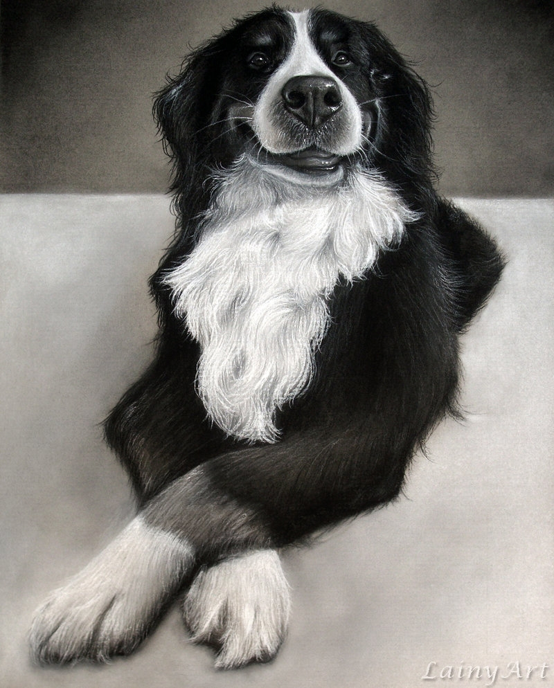 10-Hank-Alaina-Ferguson-Lainy-Animal-Charcoal-Portrait-Drawings-www-designstack-co