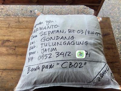 Benih Pesanan   DARWANTO Tulungagung, Jatim.  (Setelah Packing)