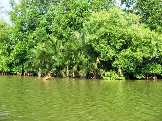 hutan mangrove hingga Muara Blacan Desa Pantai Harapanjaya Muaragembong