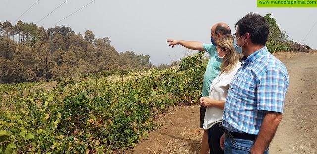 El incendio forestal de Garafía afectó a 22 hectáreas del sector agrario de la zona