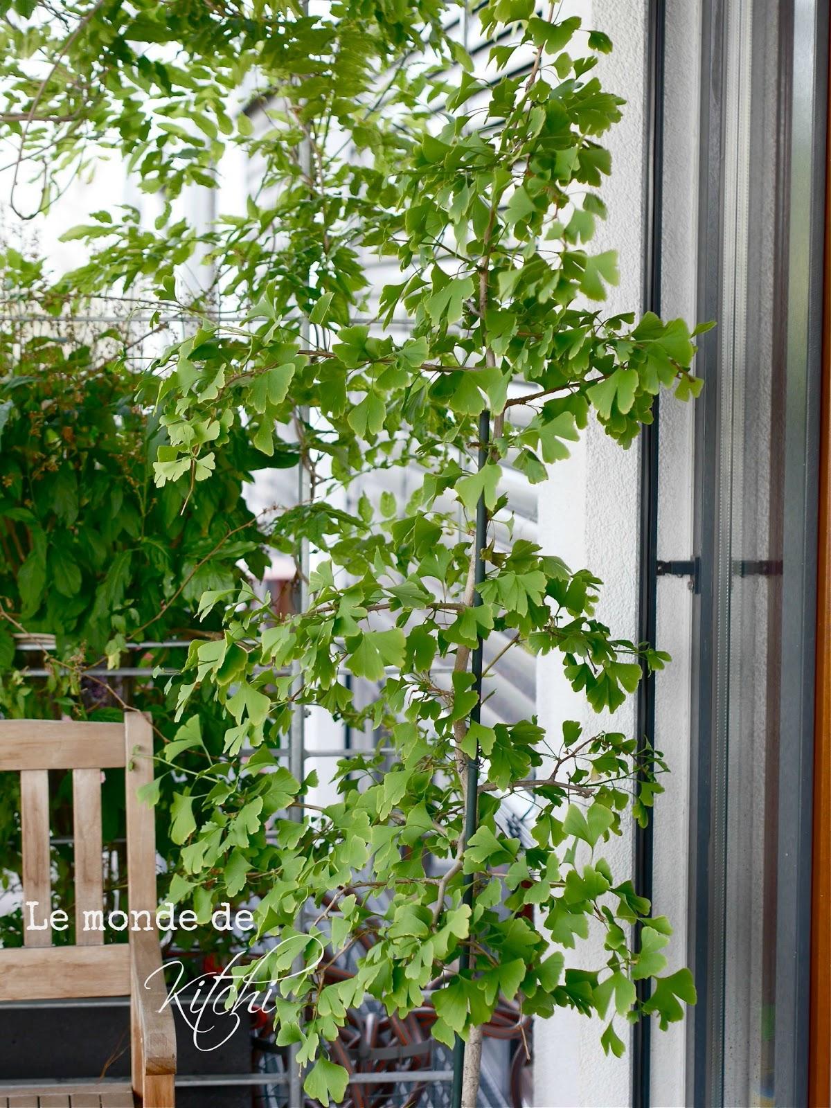 baum f r terrasse terrasse und balkon mit pflanzen und blumen gestalten baum auf der terasse. Black Bedroom Furniture Sets. Home Design Ideas