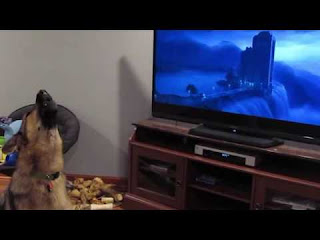 German dog howling with wolves from Zootopia♥ funny