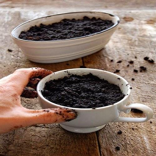 Bước 2 cách trồng cây bạc hà