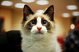 gato+con+cara+que+esta+llorando.jpg
