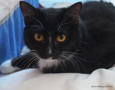 Красивая черная кошечка с глазами апельсинками хочет стать домашней