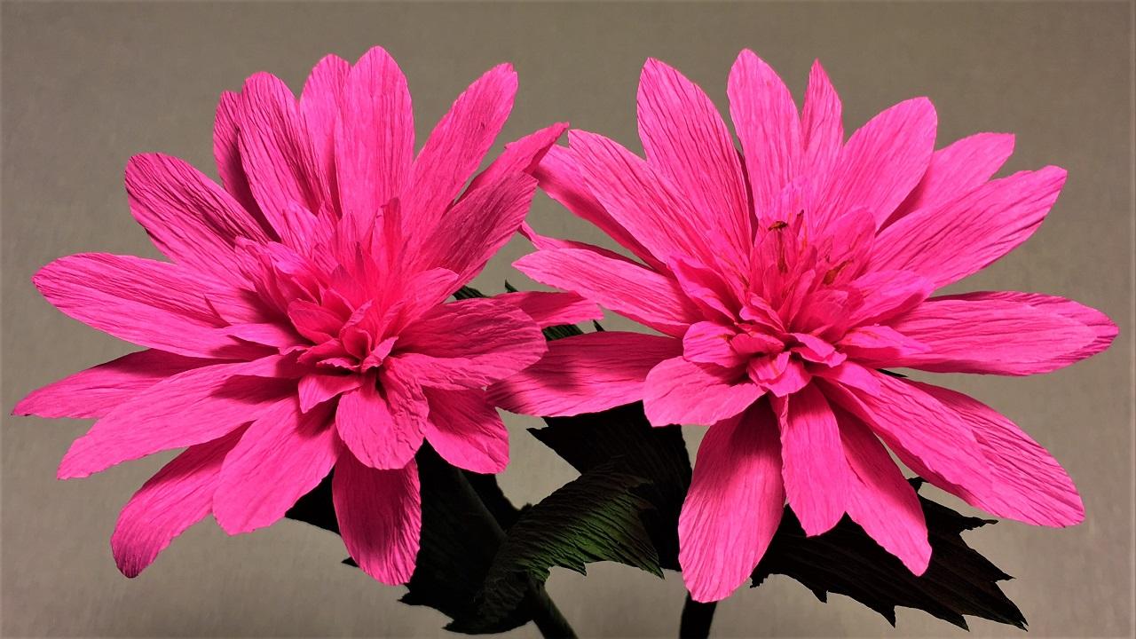 How to make dahlia paper flower diy dahlia crepe paper flower how to make dahlia paper flower mightylinksfo