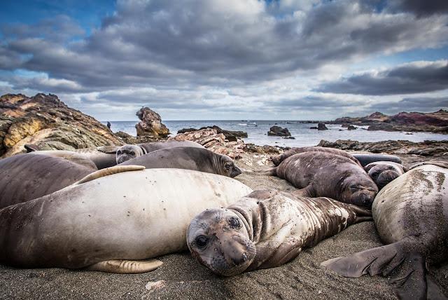 Eleven seal species narrowly escaped extinction
