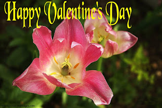 happy valentine day images love