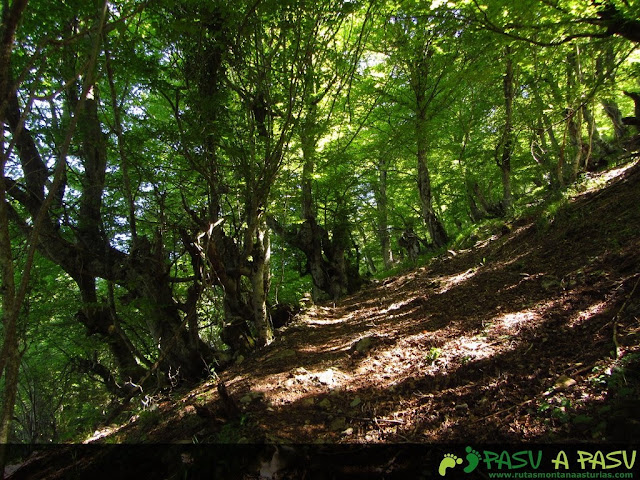Bosque hacia Llana Fresnu