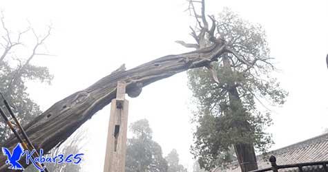 Liburan Imlek di China, Ada Kisah Pohon Naga di Shandong