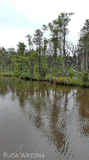 dołgie małe, jezioro, słowiński park narodowy, r10, łeba, rowy, las
