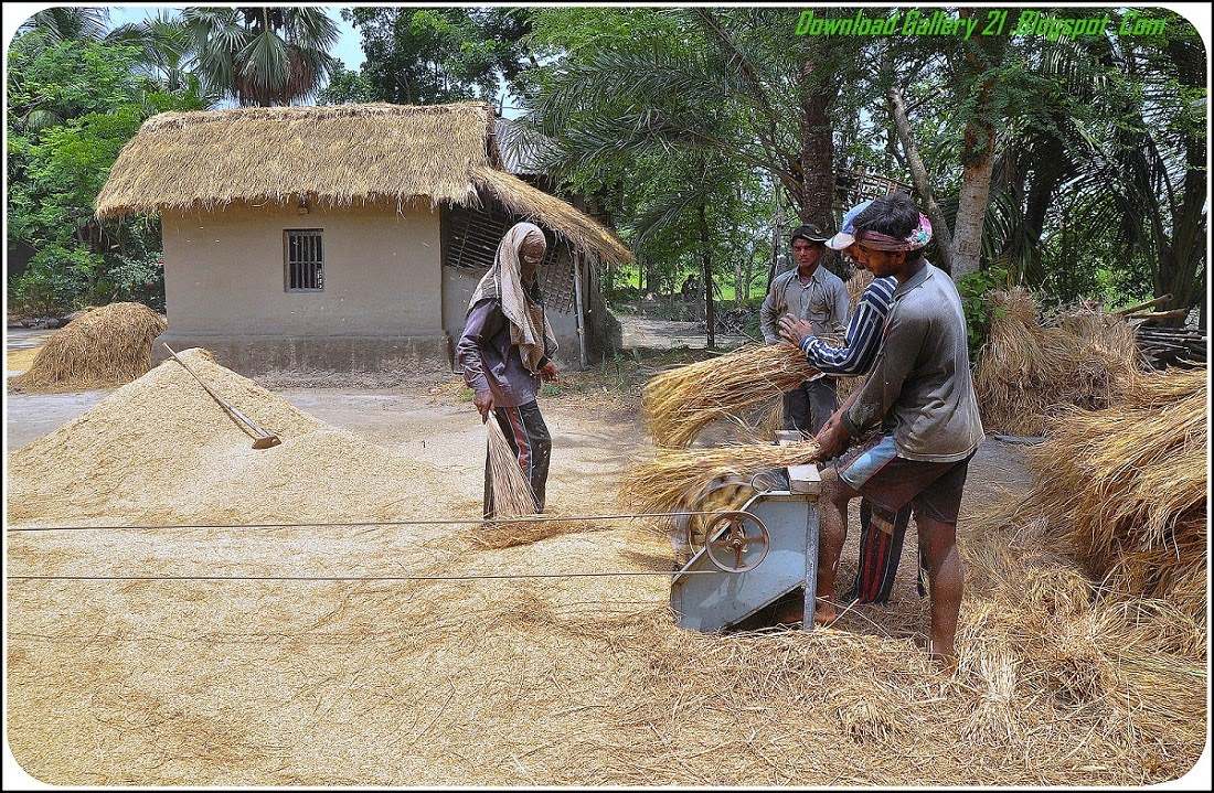 Gramin natural wallpaper of bangladesh village people - Bangladesh nature wallpaper hd ...