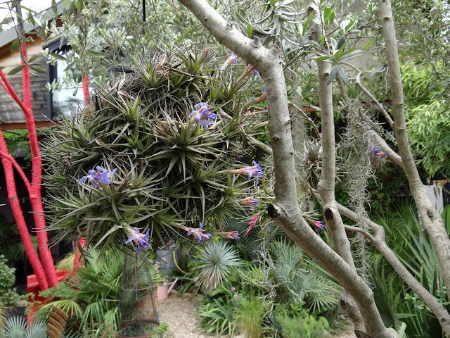 (07) Le jardin de Bésignoles - Privas - Page 2 DSC08140