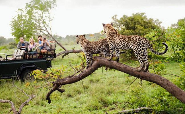 Xvlor.com Kruger National Park is the most popular reserve in South Africa