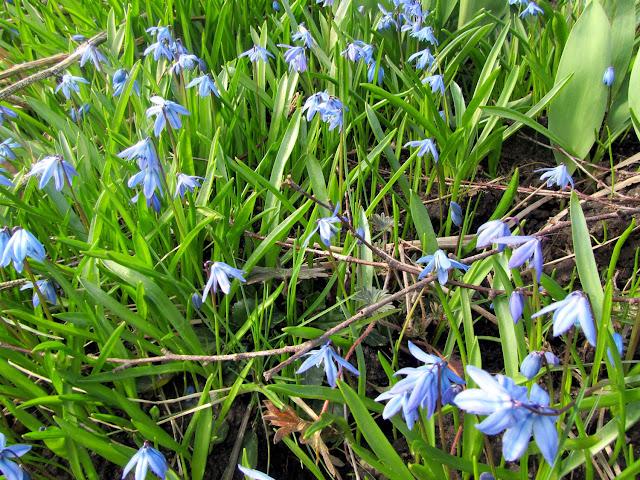 Kevätkukat