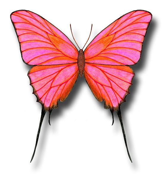 Aileen Biser' Butterfly Drawings