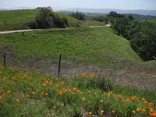 Poppies and green hills along the winding road heading away from Henry Coe State Park, Morgan Hill, California
