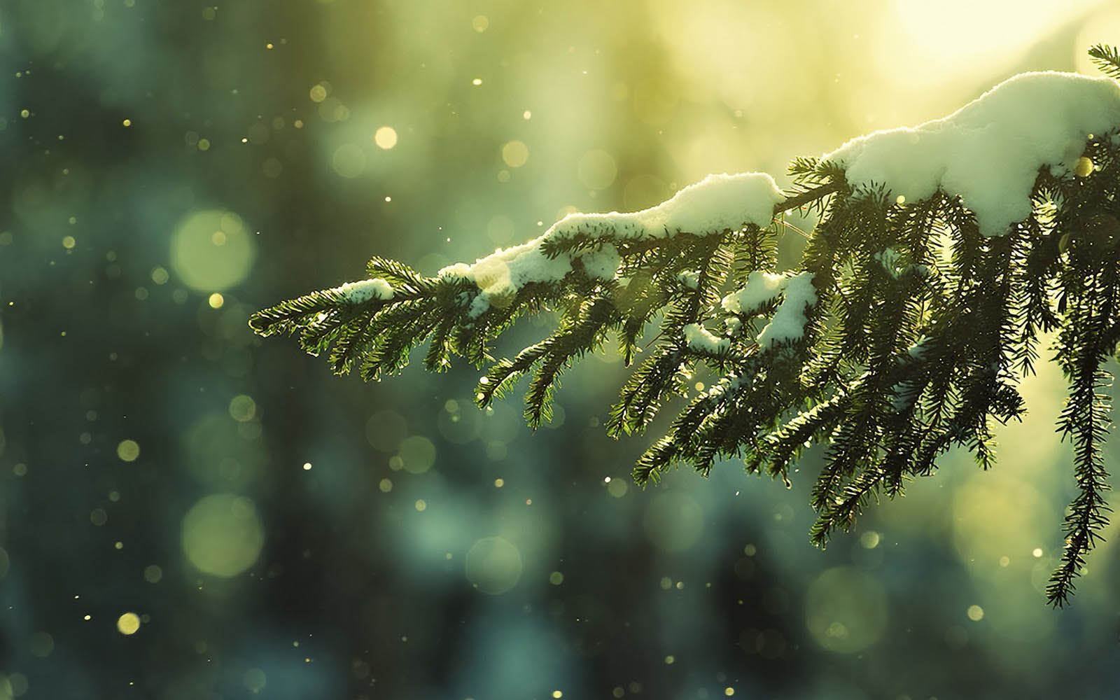 wallpaper: Winter Desktop Wallpapers and Backgrounds