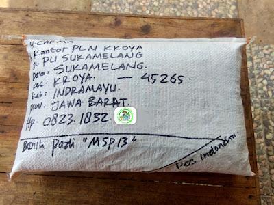 Benih Pesanan   H. CARMA Indramayu, Jabar..  (Setelah Packing)