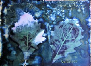 Wet cyanotype_Sue Reno_Image 456