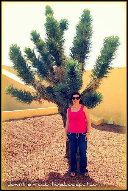 Ethel M Joshua Tree, Las Vegas Joshua Tree