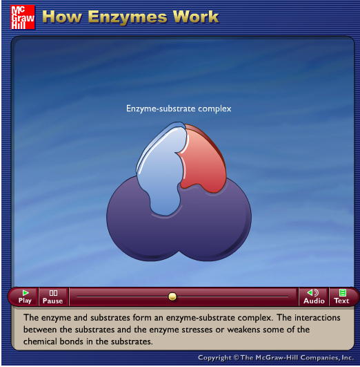 http://highered.mheducation.com/sites/0072495855/student_view0/chapter2/animation__how_enzymes_work.html