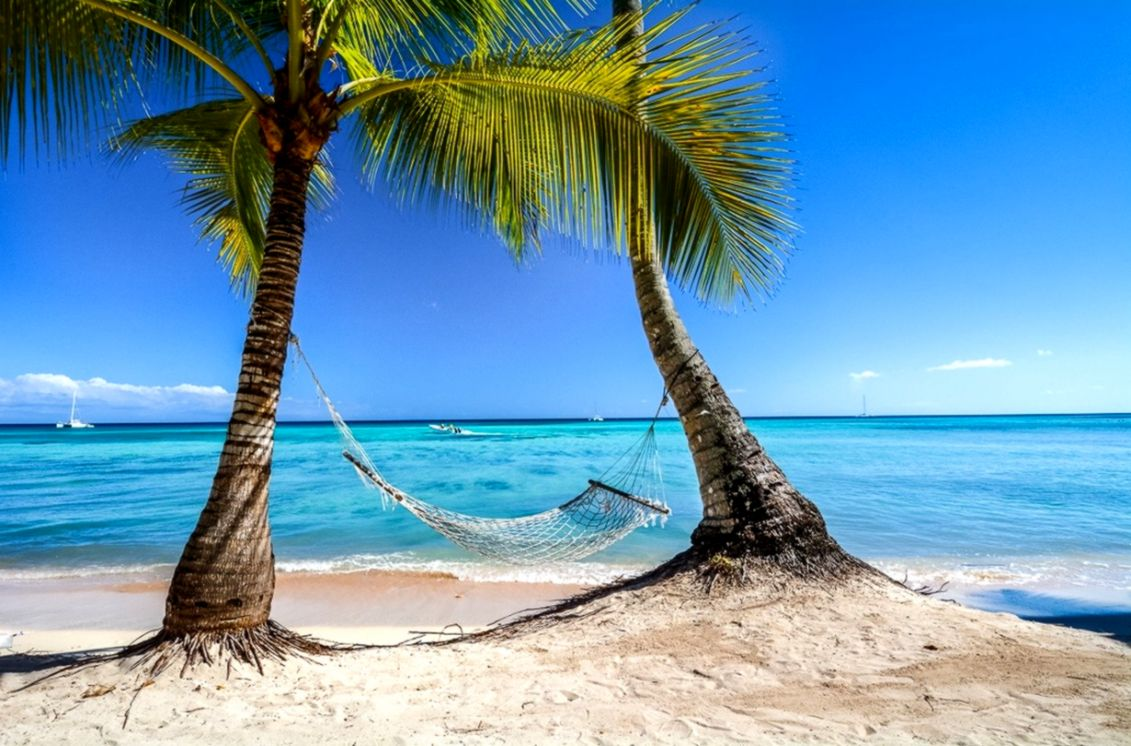 photography landscape nature tropical beach palm trees hammocks