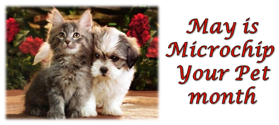 Puppy and kitten om meme with May is National Microchip Your Pet month