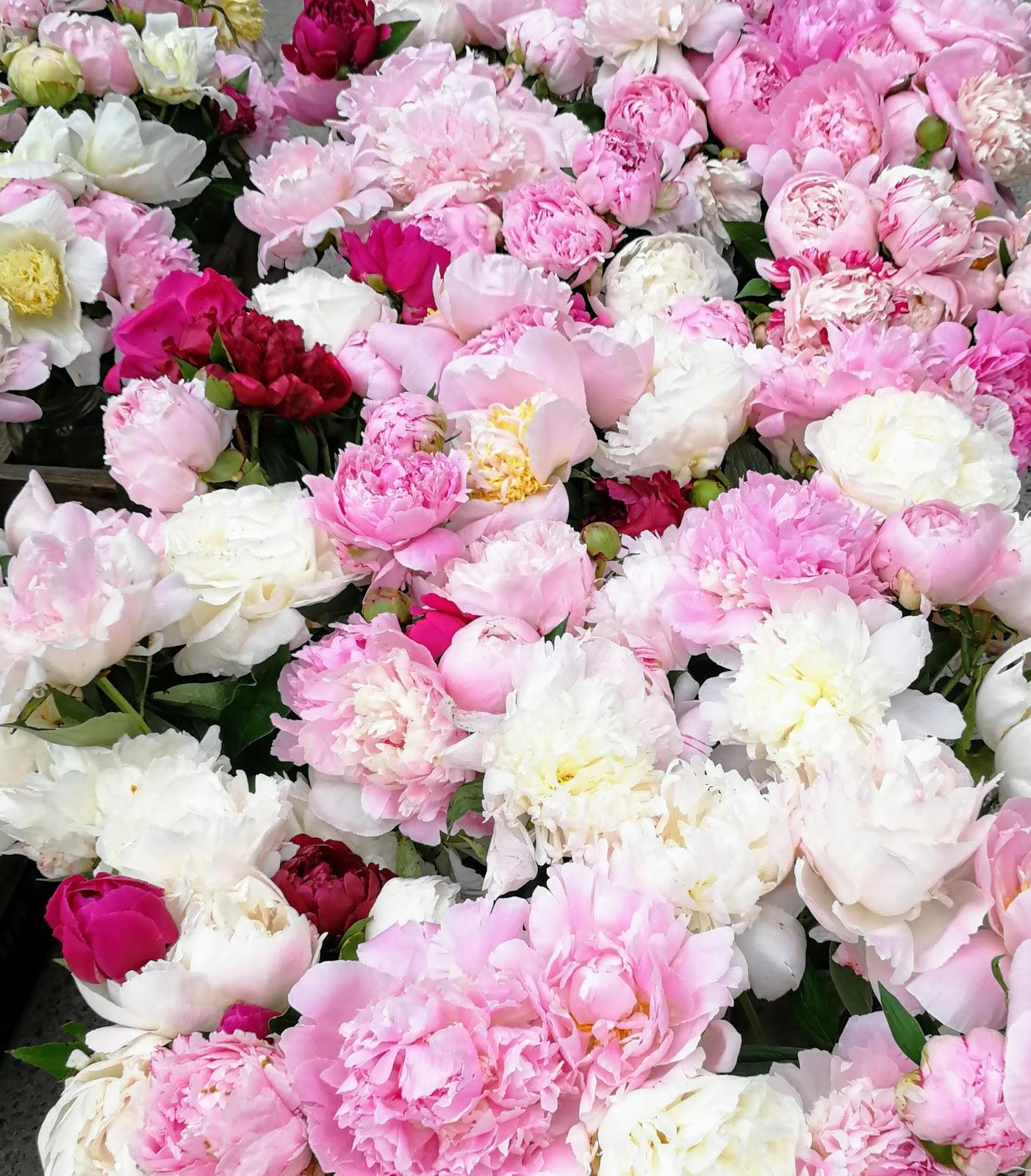 Toronto Farmers Market, fresh flowers, pink flowers, pink peonies