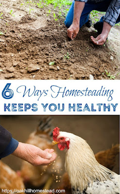 A homesteading lifestyle is a healthy lifestyle, no matter where you live.
