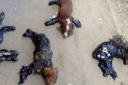 Four tortured puppies covered in hot tar and left for dead by cruel thugs