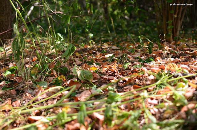 Droga do działki, liści jak w pażdzierniku