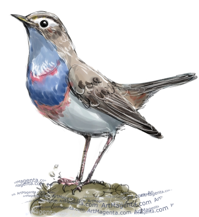 Bluethroat  sketch painting. Bird art drawing by illustrator Artmagenta