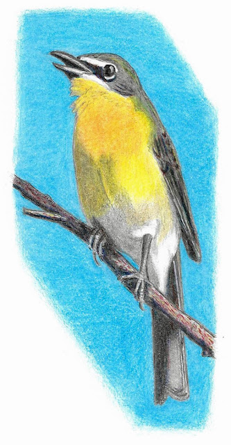 Yellow-breasted Chat in colored pencil. Greg Gillson.