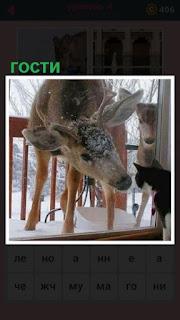 кошка около окна и к ней в гости пришли олени