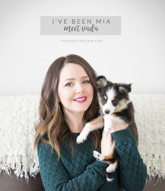 Why I've Been MIA - Introducing Little Miss Vada