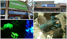 Home Place Mystic Aquarium In Ct Mother' Day 2013