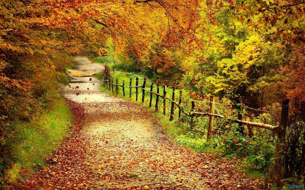 path nature natural hd autumn desktop wallpapers paths pathway fall natures portals bookmark delicious tweet tree 1080