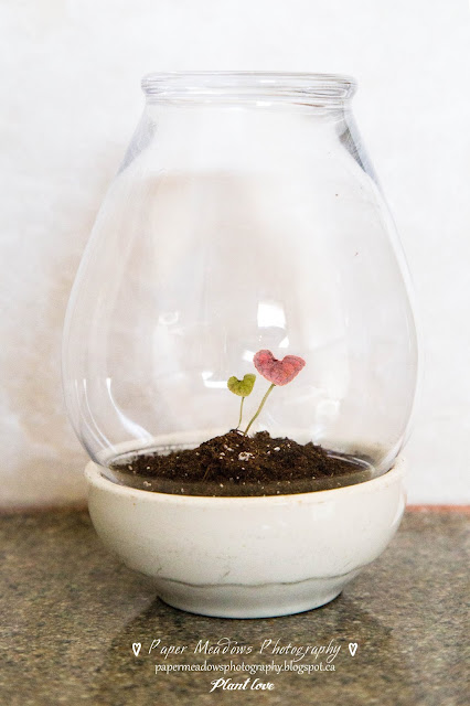 Paper Meadows Photography Blog-Plant love-Mini Terrarium-Plants under glass.