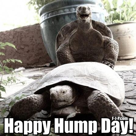 Funny Happy Tortoise Hump Day Joke Picture