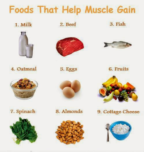 good protein diet for muscle gain