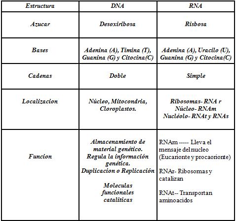 Dna Y Rna Funcionamiento Y Estructura Del Adn Y Arn
