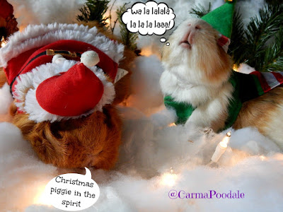 Guinea Pigs singing