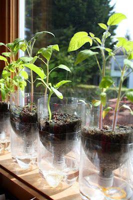 cara membuat tanaman hidroponik sederhana